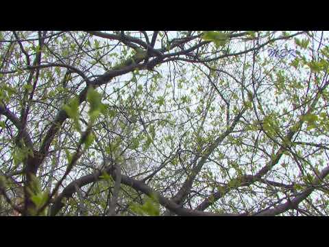 Синоптики прогнозируют ухудшение погодных условий в Бердске на ближайшие дни