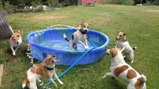 Los perros también van a la piscina
