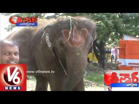 Smart Use Of Elephant in Campaigning - Teenmaar News