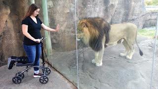 León se encapricha de patinete
