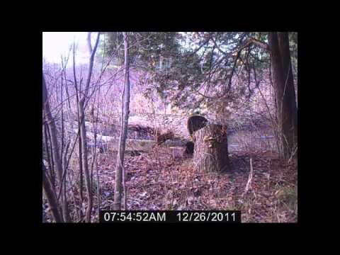 beaver caught on video