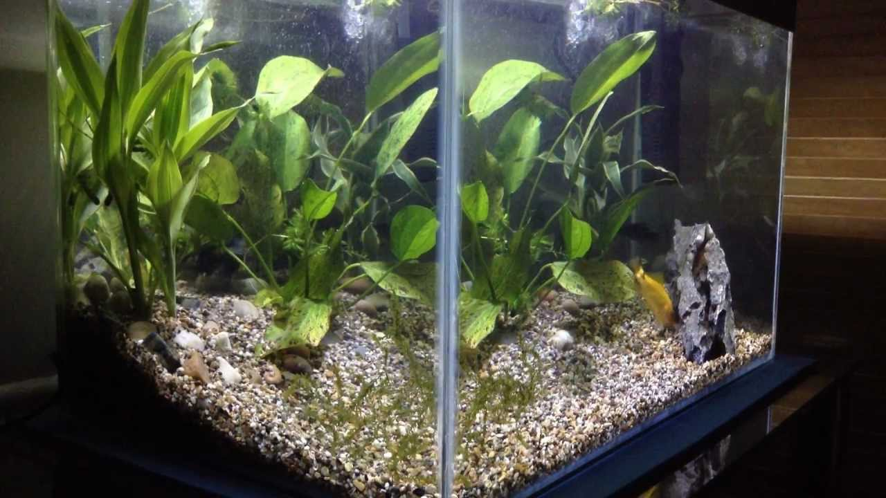 10 gallon fish tank aquarium with live plants youtube for Live fish tank