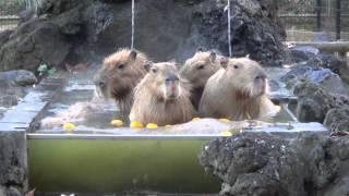 みんなで温泉に入る