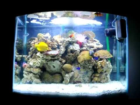 29 Gallon Bowfront Saltwater Aquarium and Bob Marley - YouTube