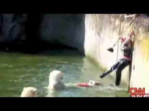 Napadení ledním medvědem :-O