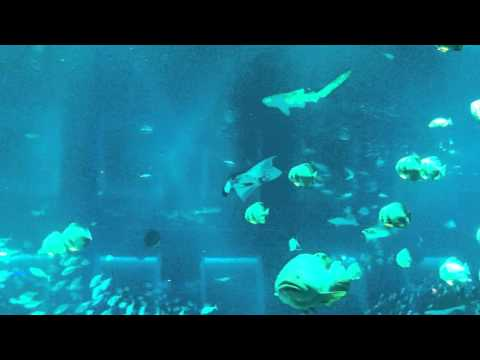 Gương bể cá lớn nhất Thế Giới ở Singapore