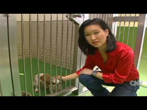 Japan's dog death row