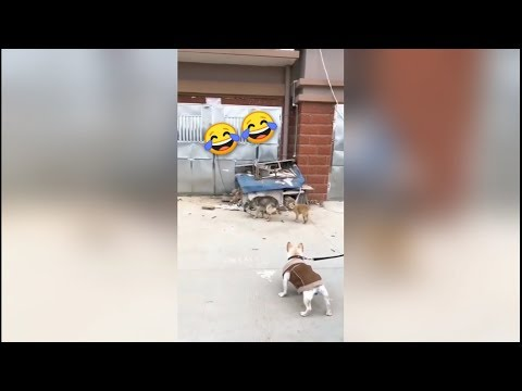 Dog can also bounce, the best collection of error videos?