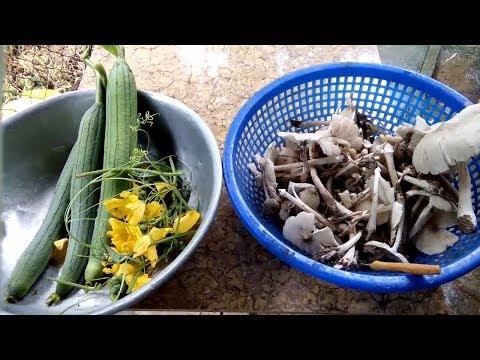 ký ức miền tây đi hái mướp xào với nấm mối_món ngon đặc sản miền quê