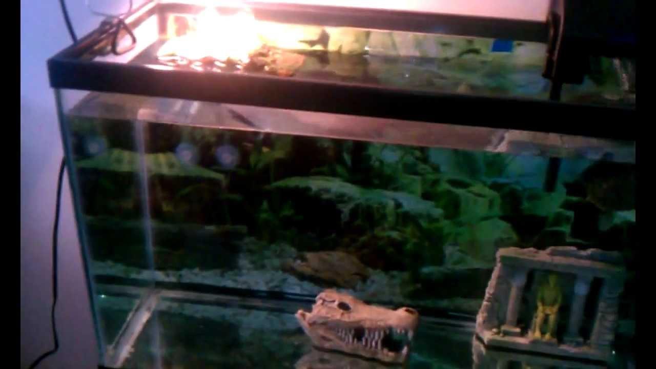 My new 30 gallon turtle tank youtube for 30 gallon fish tank walmart
