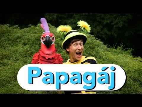 Smejko a tanculienka - Papagáj