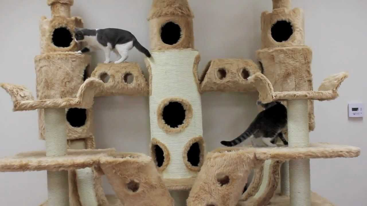 Buckingham Palace Cat Tree By Kitty Mansions Youtube