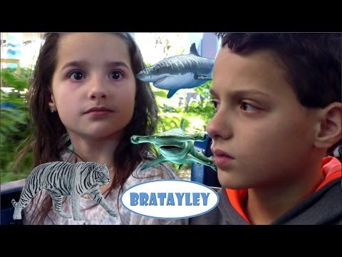Great Whites, Tigers, and Hammerheads.  Oh My! (WK 156.5) | Bratayley