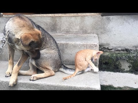 Hidden camera dog teaches cat skill mouse catching  (Part 2)| Funny animals