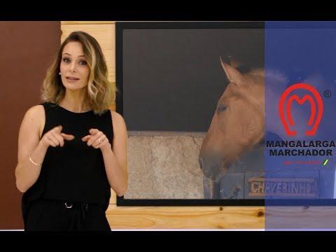 No MMTV deste domingo (12/11) você vai conhecer mais sobre hotéis para cavalos. Acompanhe as competições em Minas Gerais e no Espírito Santo. Veja ainda mais informações do projeto Selando o Futuro. Não perca! É no Canal Rural , às 19h.