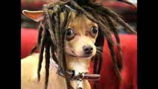 Divertidos perritos disfrazados