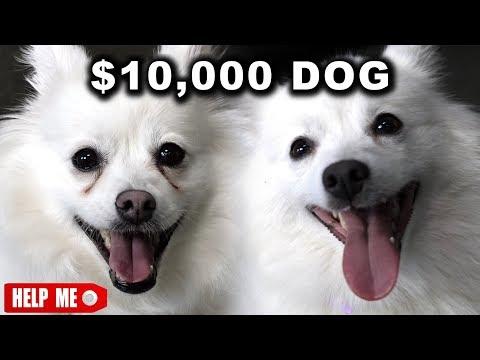 10000 DOG VS 1 DOG