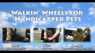 Walkin' Wheels: Dog Wheelchair