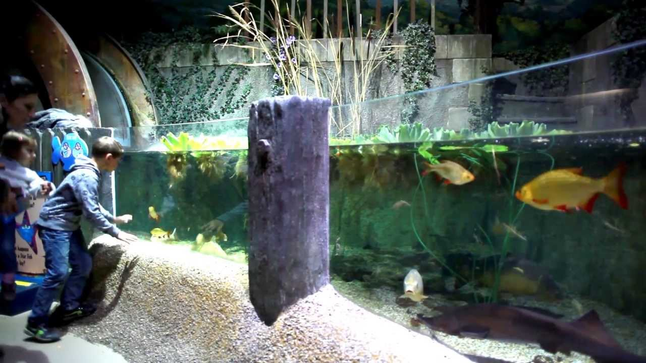 Visite de lAquarium SEA LIFE Paris Val dEurope - YouTube