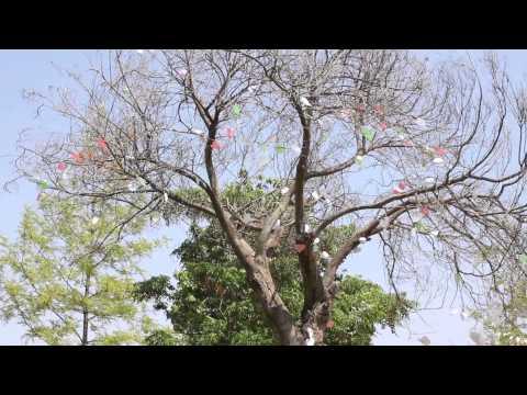 شجرة الحب