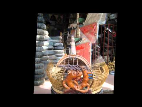 long chim dep Hai Duong.mpg