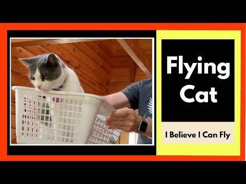 I Believe I Can Fly | Funny Flying Cat Videos