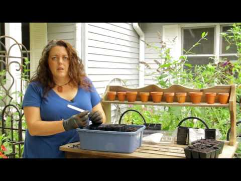 Starting Summer Plants (veggies) for your Garden: Seed Starting for the Garden Tower