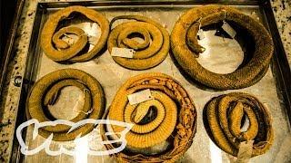 Snake Island (Full Length Documentary)