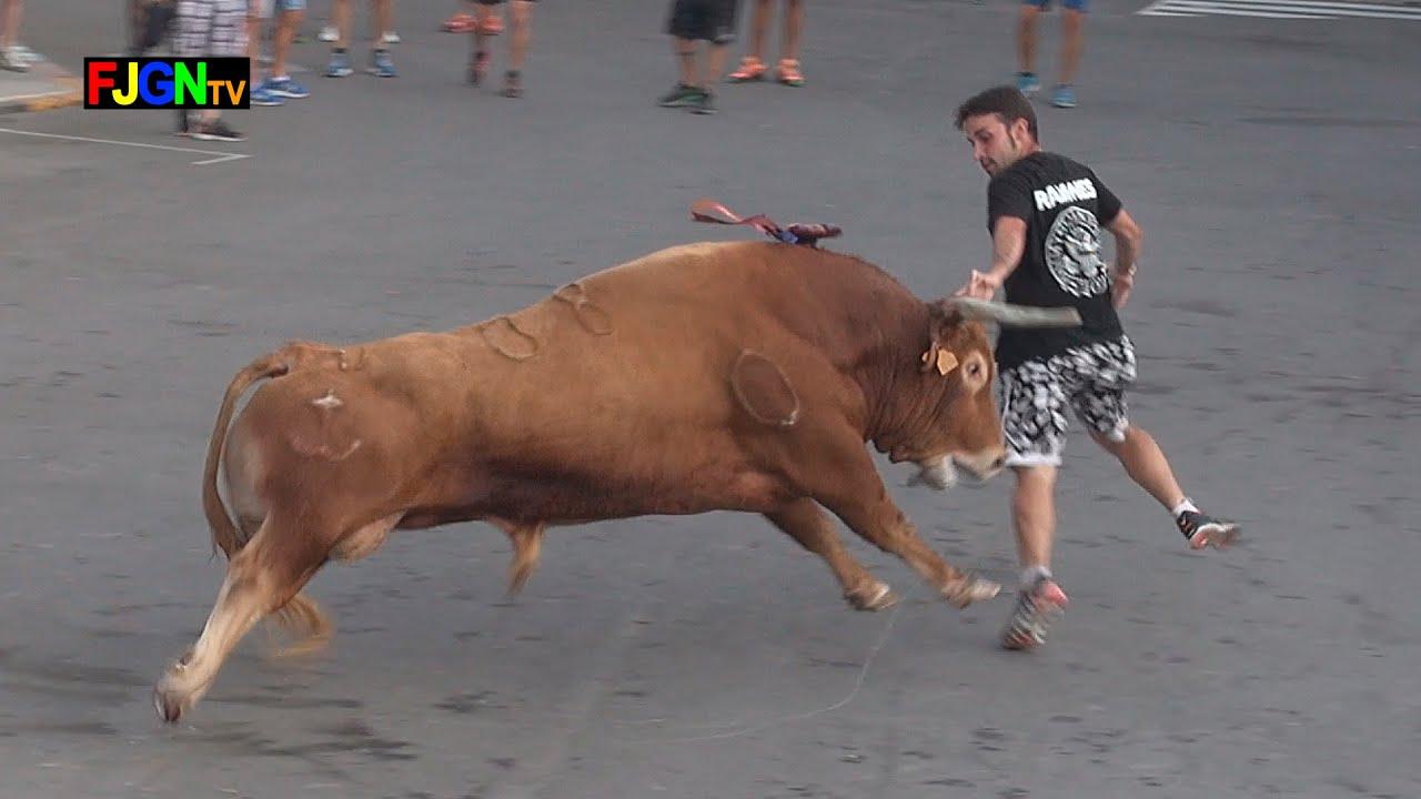 3 Toros Sants de la Pedra 2014 - La Vilavella