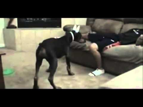 Video clip hài hước: Xem 1000 lần vẫn buồn cười =))