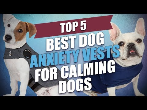 Best dog anxiety vests for calming dogs