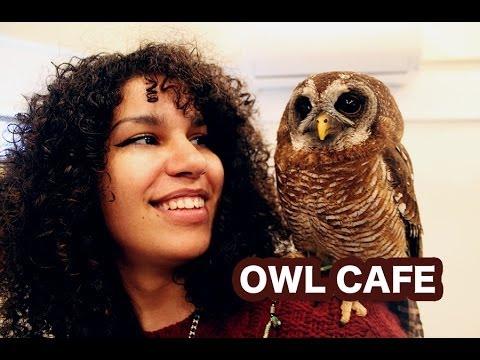 Thumbnail image for 'Owl Cafes: The Latest Craze'