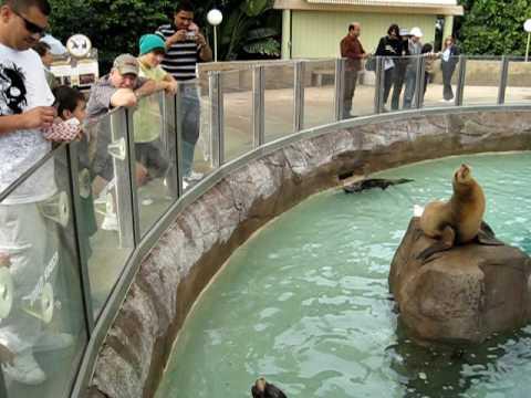 Sea World San Diego 12 - Tourist feeds the seals fish