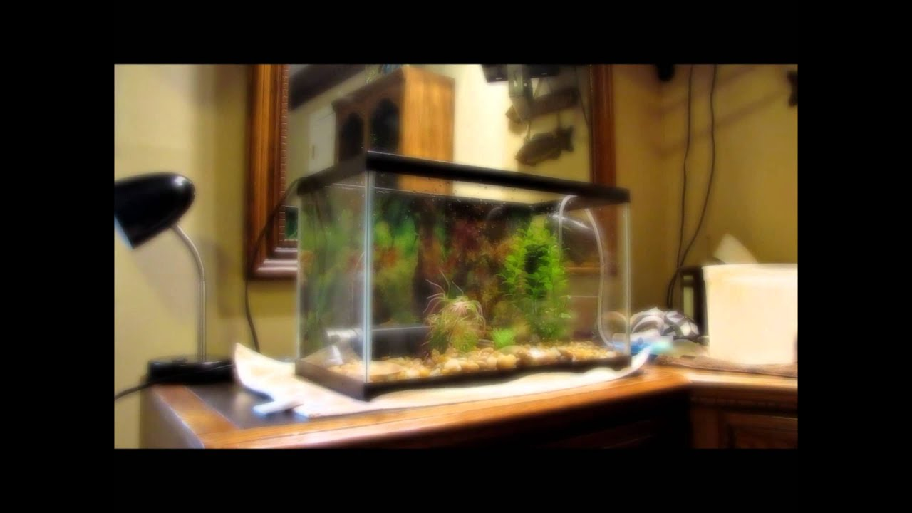 how to setup an aquatic turtle tank - YouTube