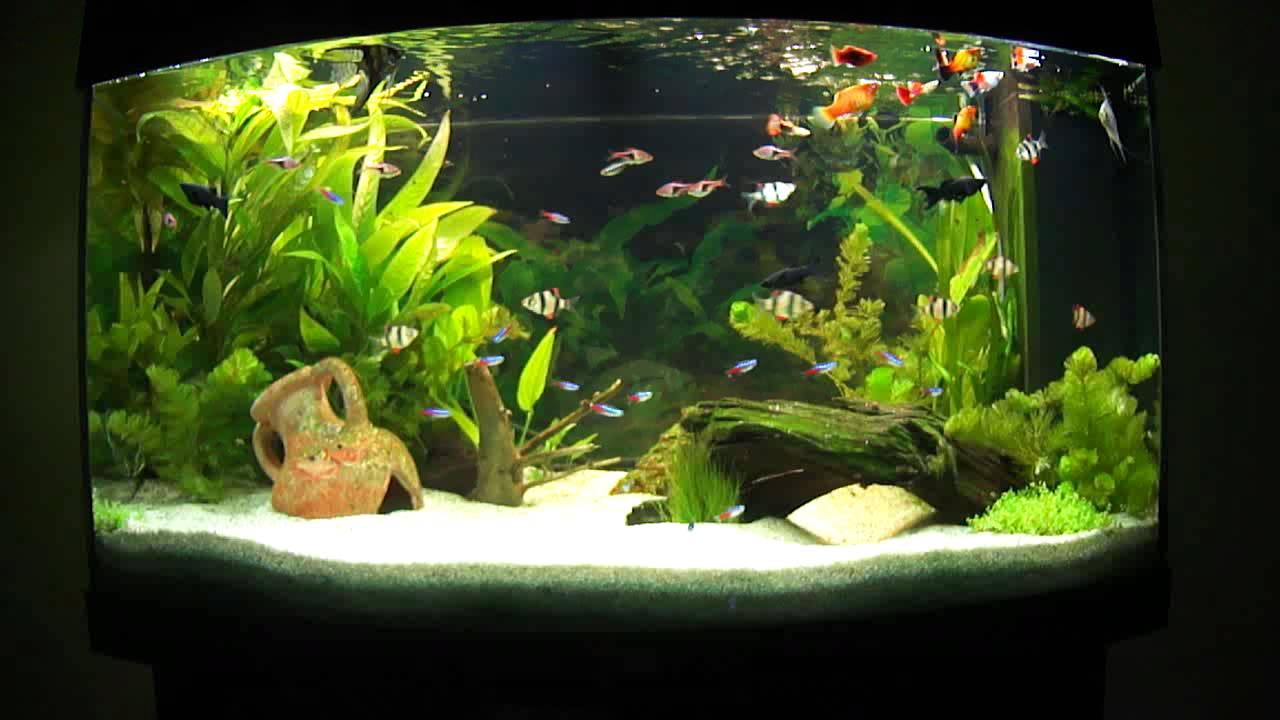 aquarium d eau douce plant 233 aquascape aquascaping 4