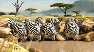 ROLLIN` SAFARI - what if animals were round ??