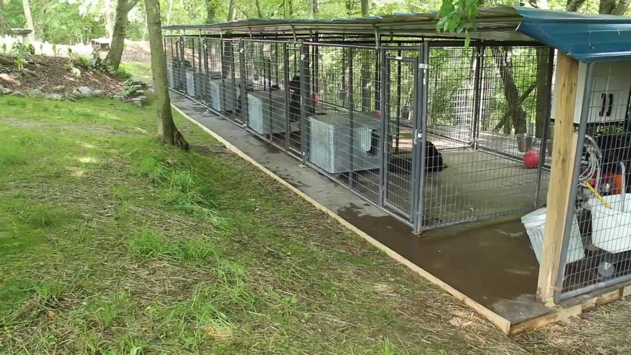 Rottweiler dog kennels nashville tennessee rottweiler for Building dog kennels for breeding