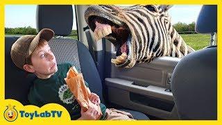 Animal Adventure Park Zoo with Animals for Kids, Dinosaur Track & Fun Outdoor Wildlife Activities