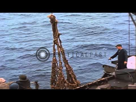 Activities of 3rd Marine Division on Iwo Jima, Japan. HD Stock Footage
