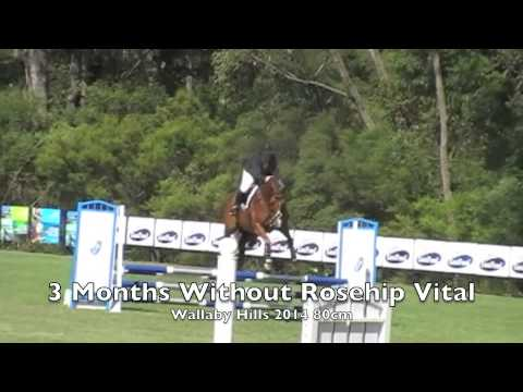 Cogo Longshot with and without Rose-Hip Vital Equine