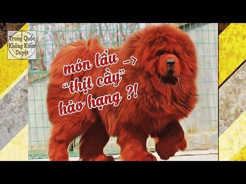 Trung Quốc: Khi Chó Ngao Tây Tạng Trở Thành Món Lẩu! | Trung Quốc Không Kiểm Duyệt