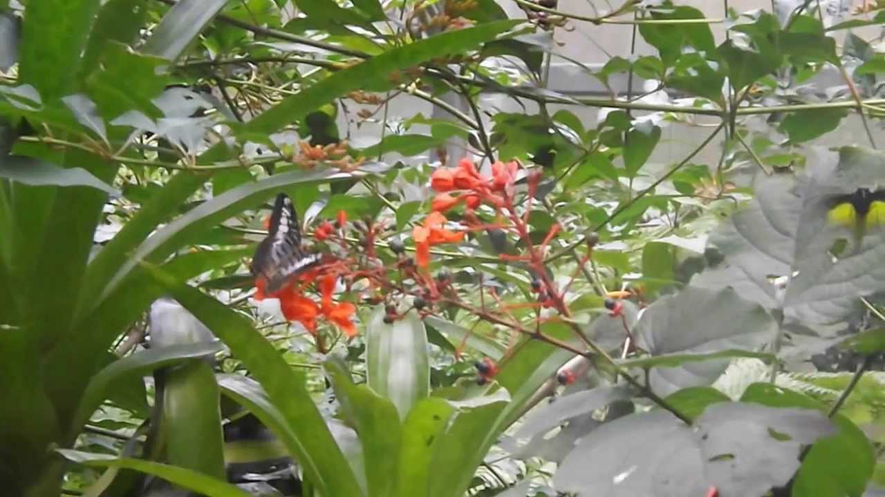 Visit To The Butterfly Garden Rain Forest Gainesville