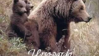 Animais Da América Do Norte Animals Of USA, Canada And