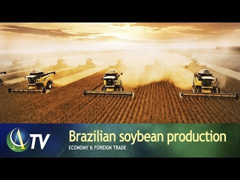 Brazilian soybean production | Economy & Foreign Trade