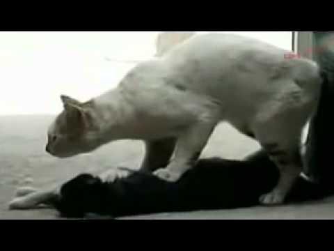 Tình cảm của động vật thật như con người