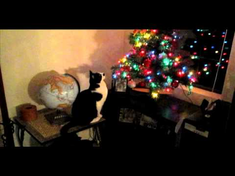 2010 cat knock over Christmas Tree