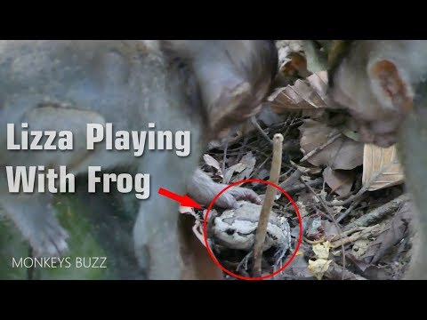 Funny Monkey Playing With Frog! Lizza and Friend Playing Frog So Happy - Monkey Buzz 640