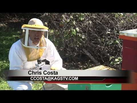 Local Honey Health Benefits