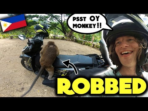 MONKEYS STOLE MY MONEY !! .. (Funny what they did with it)