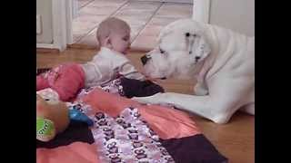 Dangerous American Bulldog is Babysitting